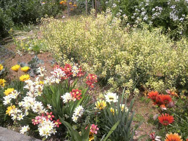 和具荘お花