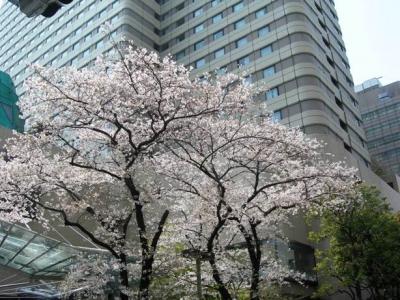 池袋・ホテル前の桜
