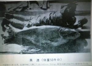 淡水大魚釣りのコクレン