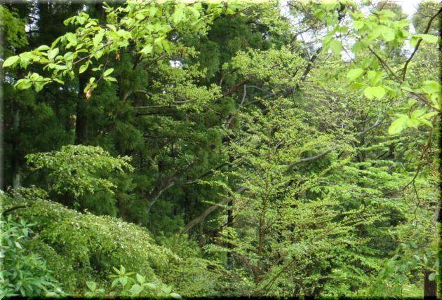 2010.4月2 新緑4.jpg