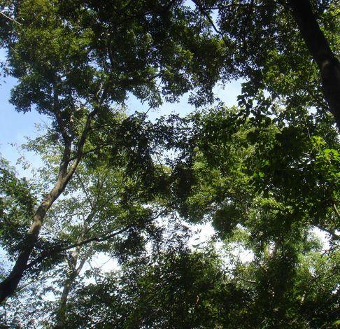 2008,9月 緑.jpg