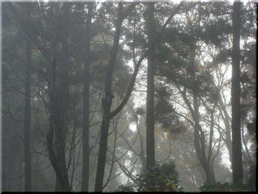 2009,12月 霧.jpg