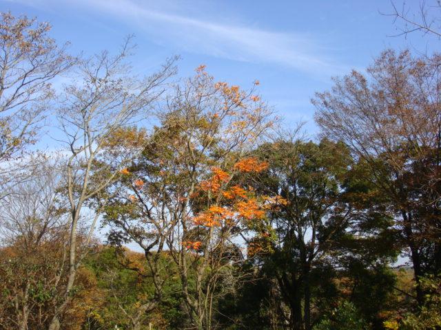 2010.11月 004.JPG