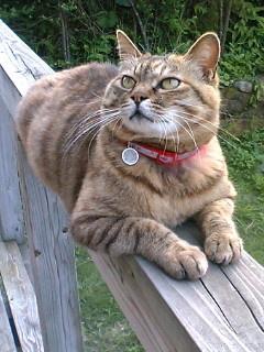 猫ちゃんはよく見上げる