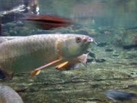 2009年5月22日名古屋港水族館�
