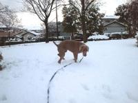 2011名古屋雪2