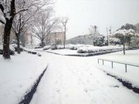 雪の風景1(名古屋)