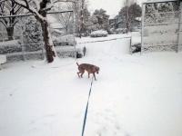 雪の風景2(名古屋)