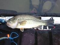 2012年4月13日ブラックバス釣り1
