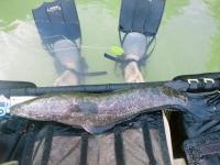 2012年6月22日雷魚釣り