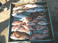 2012年10月31日ウタセ真鯛・ワラサ釣り2