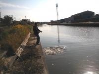 2012年11月13日ソウギョ釣り2