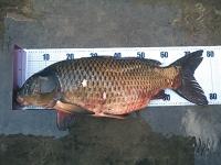2012年11月13日ソウギョ釣り6