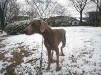 2012年名古屋初雪2