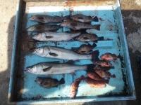 2014年04年23日マダカ釣り
