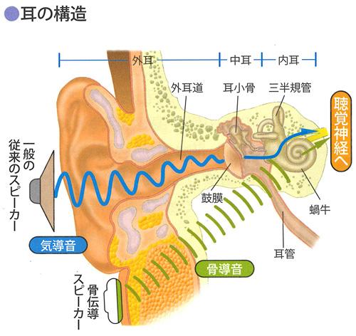 耳のしくみ:聴きたい時だけ耳に当てれば聞こえる:骨伝導クリアーボイス