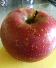 りんごが良いと教えてもらい早速食べています