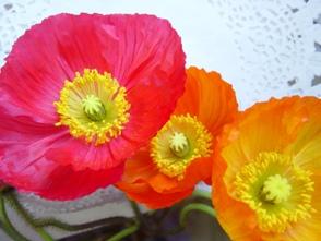 咲くまで何色なのかわからないポピーは楽しみで飾ってます