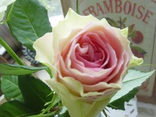 湘南育ちのバラ