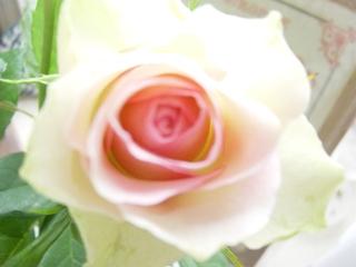 白いバラと組み合わせるといい感じ♪