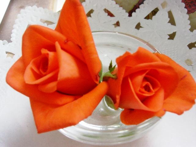 最近オレンジのバラが気に入っています