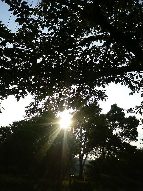 通りがかりの公園の木の間の光