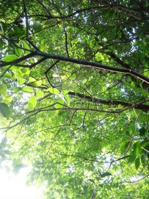 木漏れ日が綺麗