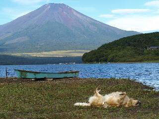 富士ごろり