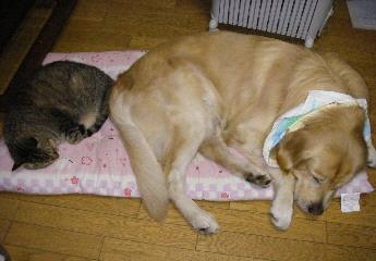 松と座布団