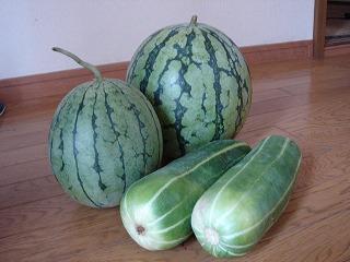 まろ印の野菜