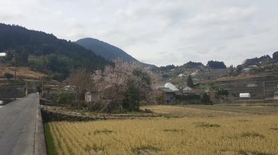 神山の桜のある風景