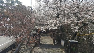 丈六寺の門の桜の風景