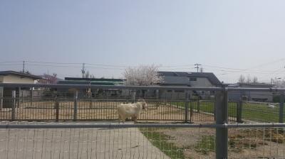 リーベフラウ 加工工場から見た店舗