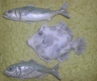 きたまる魚