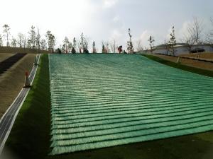 アスピア草スキー