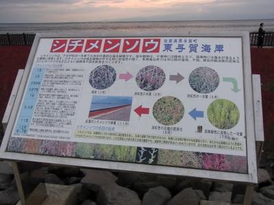 東与賀海岸のシチメンソウ