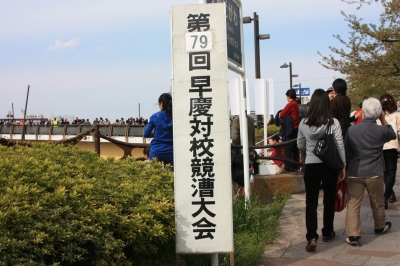 隅田川早慶レガッタ1