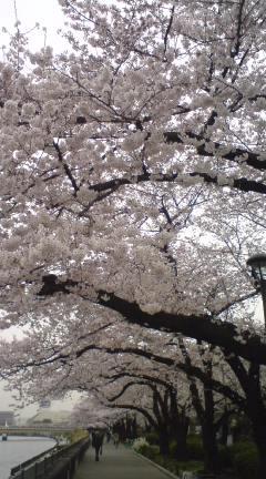 2011.隅田公園の桜