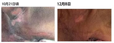 komon_sikori