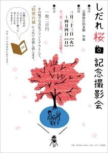 しだれ桜記念撮影