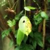 バラの葉2