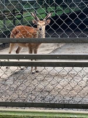 鹿島神宮 鹿