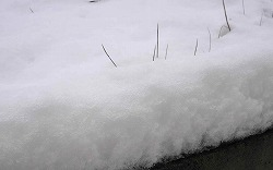 湿った雪です