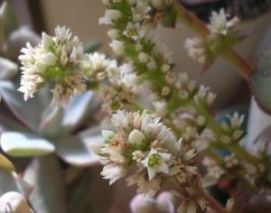 火祭りの花2009