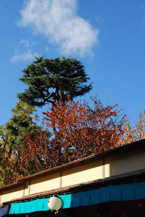 紅葉と緑の奥山風景