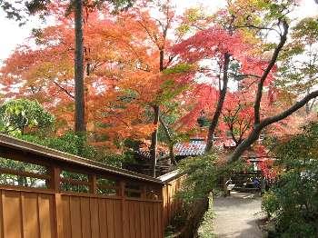 階段からの紅葉