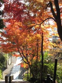 紅葉(住吉神社)