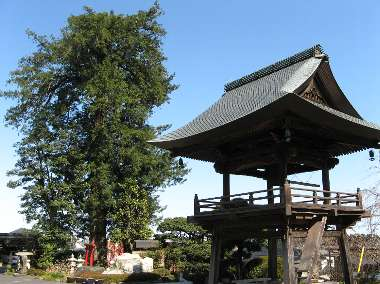 カヤ (宗泉寺)