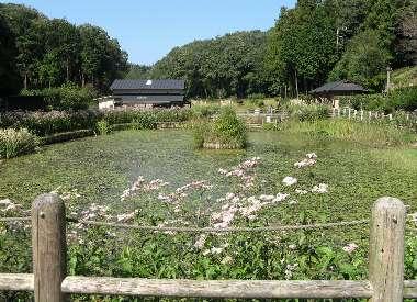 吹上しょうぶ公園(2007.10.7)