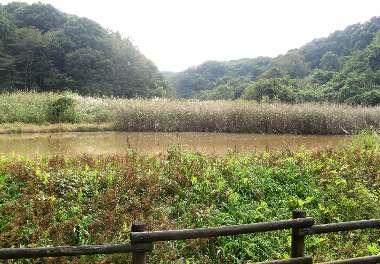 水鳥の池(さいたま緑)